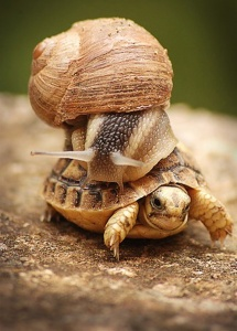 snail_on_turtle