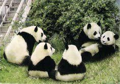 panda meeting 2