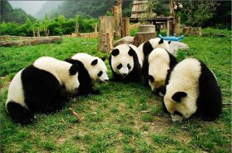 panda meeting